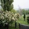 arbuste_fleurs